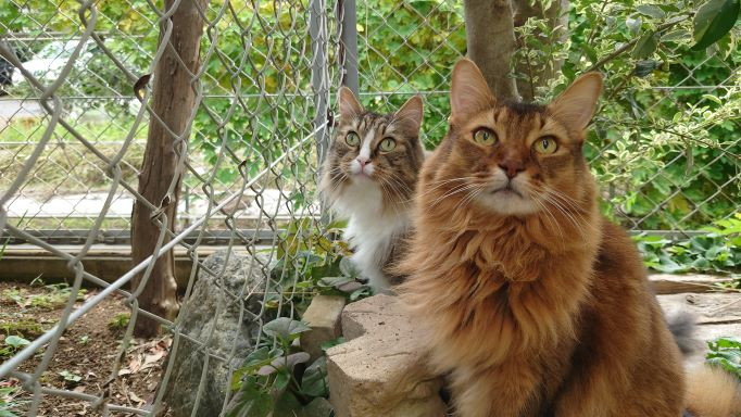 父さんの頭の上に何かありますか?と聞きたくなる写真。二匹の猫