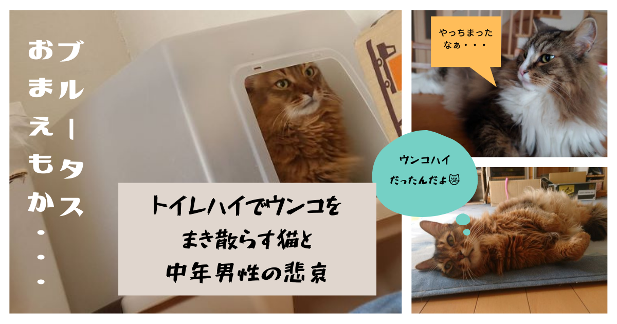 f:id:cat-cat-48:20211023100025p:plain