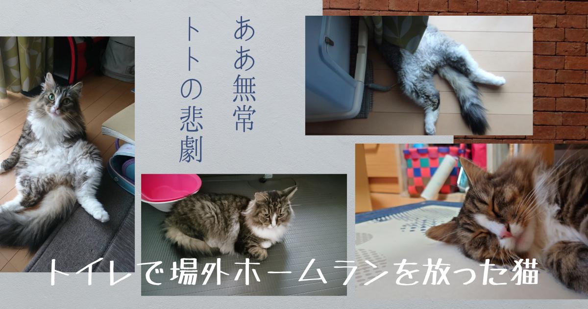 f:id:cat-cat-48:20211023102633p:plain