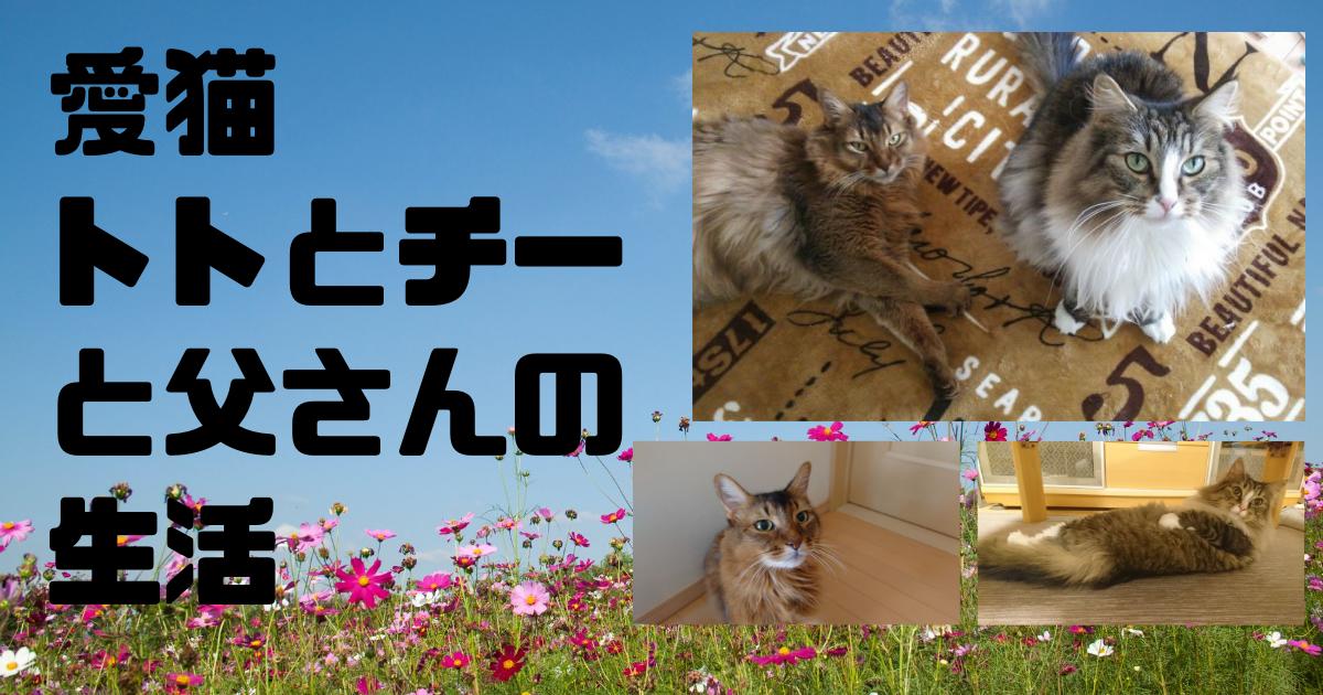 https://cdn-ak.f.st-hatena.com/images/fotolife/c/cat-cat-48/20211023/20211023120330.png