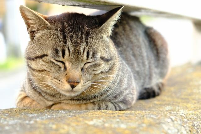 f:id:cat-psychologist:20201103135835j:plain