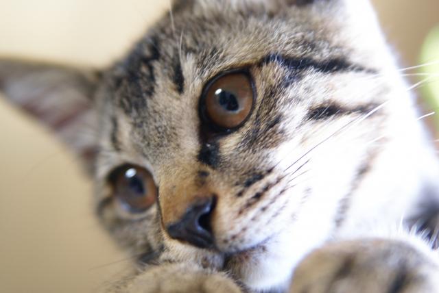 f:id:cat-psychologist:20201106141804j:plain