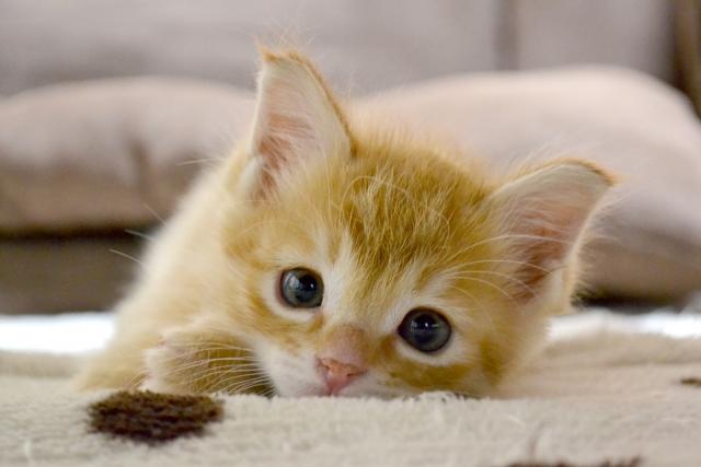 f:id:cat-psychologist:20201112173420j:plain