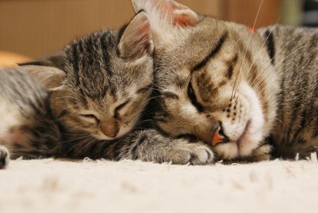 f:id:cat-psychologist:20201115223757j:plain