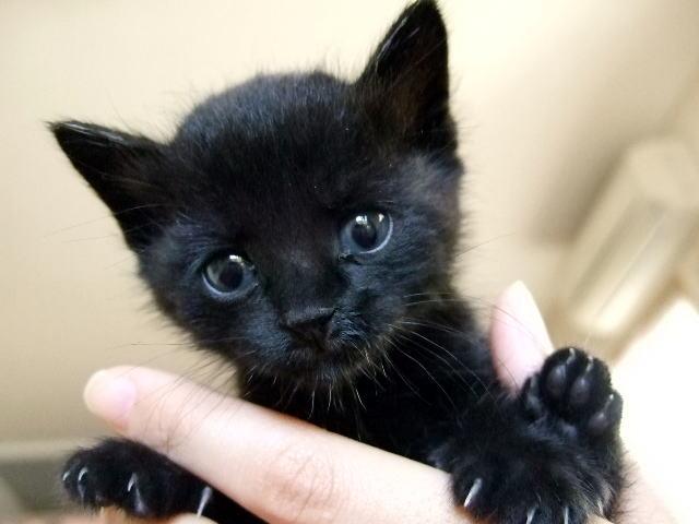 f:id:cat-psychologist:20201116184210j:plain