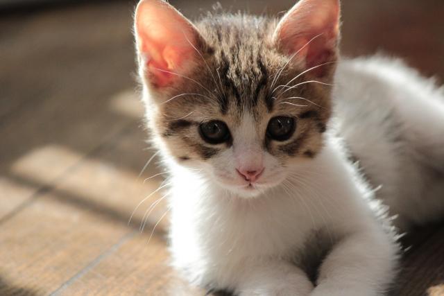 f:id:cat-psychologist:20201121070435j:plain