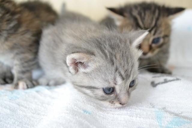 f:id:cat-psychologist:20201122111932j:plain