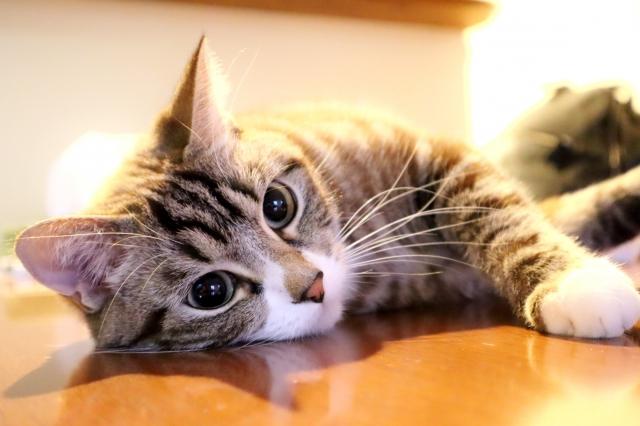 f:id:cat-psychologist:20201123193852j:plain