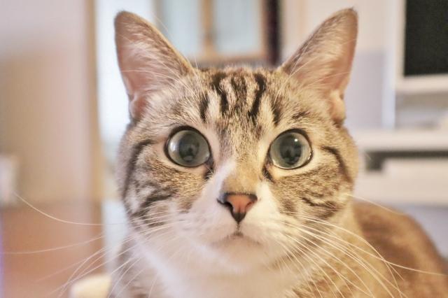f:id:cat-psychologist:20201126053113j:plain