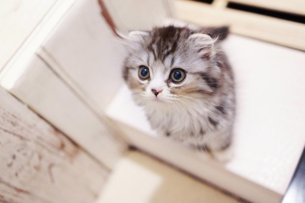 ストレス社会でも猫のような生き方に学ぶ7つの処世術