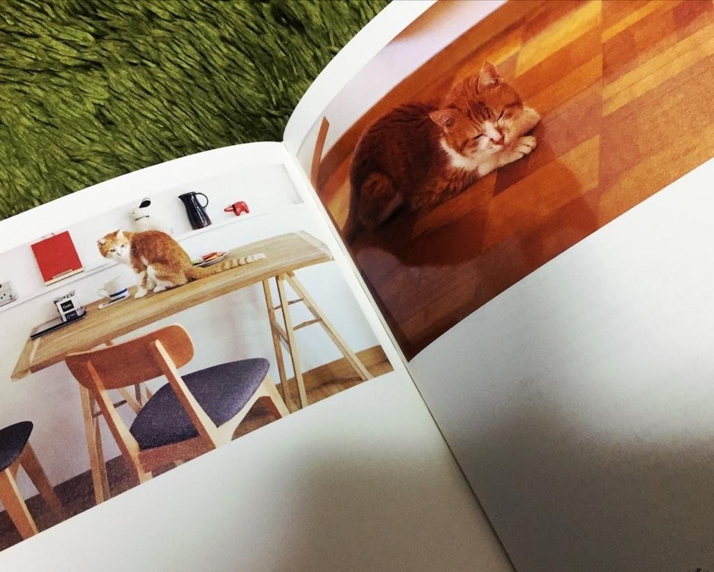 f:id:cat-whisker:20170825071318j:plain