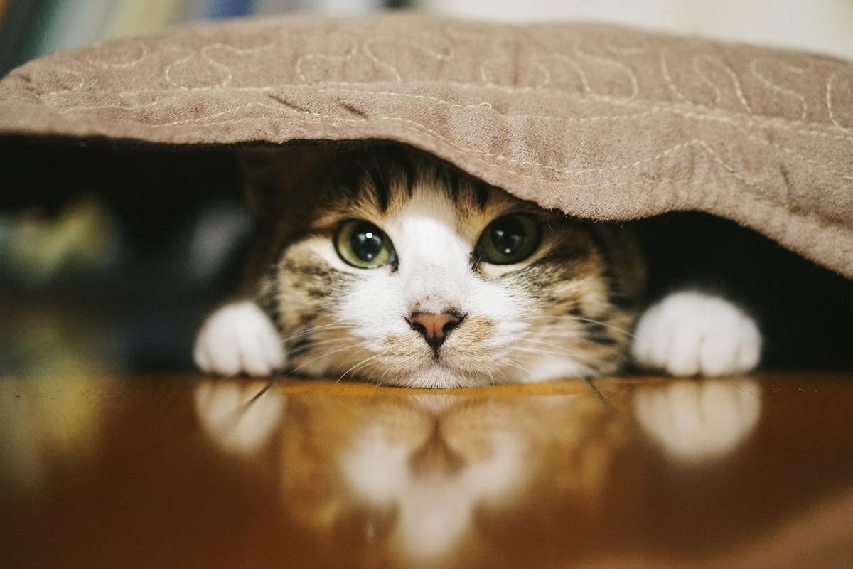 「子ネコの写真」を見ると集中力が維持できる