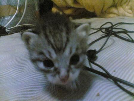 f:id:cat4vip:20070417052203j:image:w120
