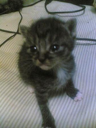f:id:cat4vip:20070417052448j:image:w90