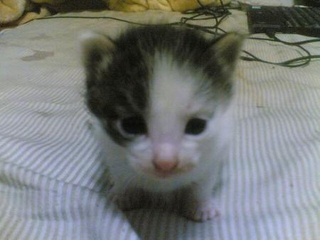 f:id:cat4vip:20070417052715j:image:w120