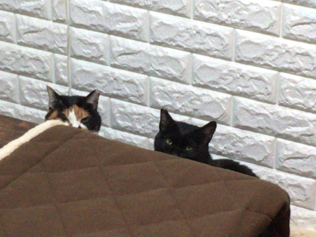 f:id:cat_akira:20171203230353j:plain