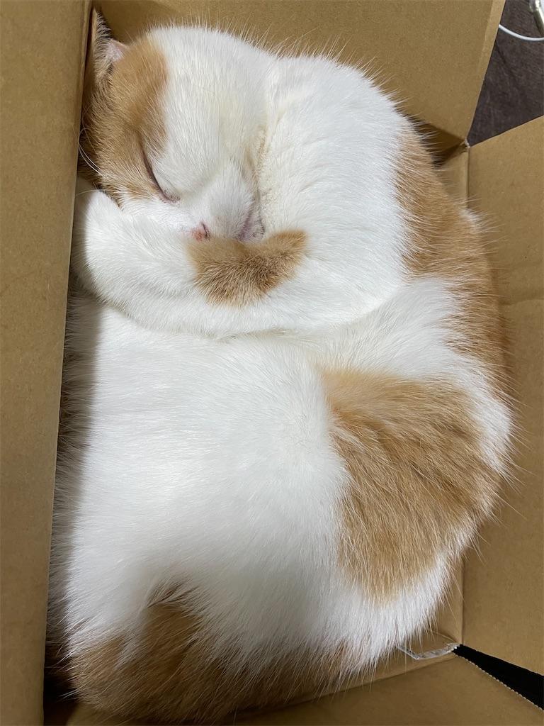 f:id:cat_lamune:20210410132520j:image