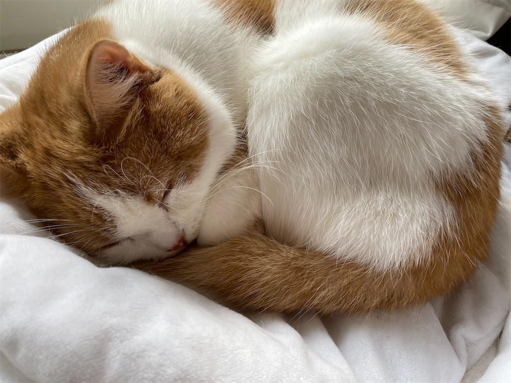 f:id:cat_lamune:20210412092413j:plain