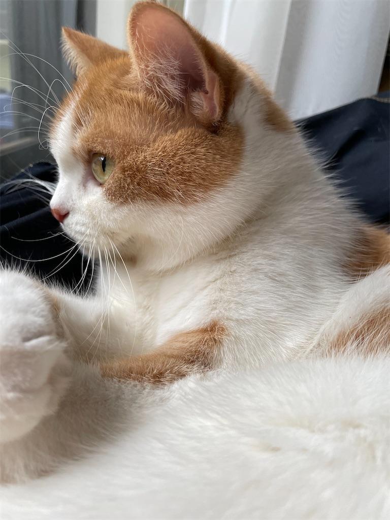 f:id:cat_lamune:20210511161838j:image