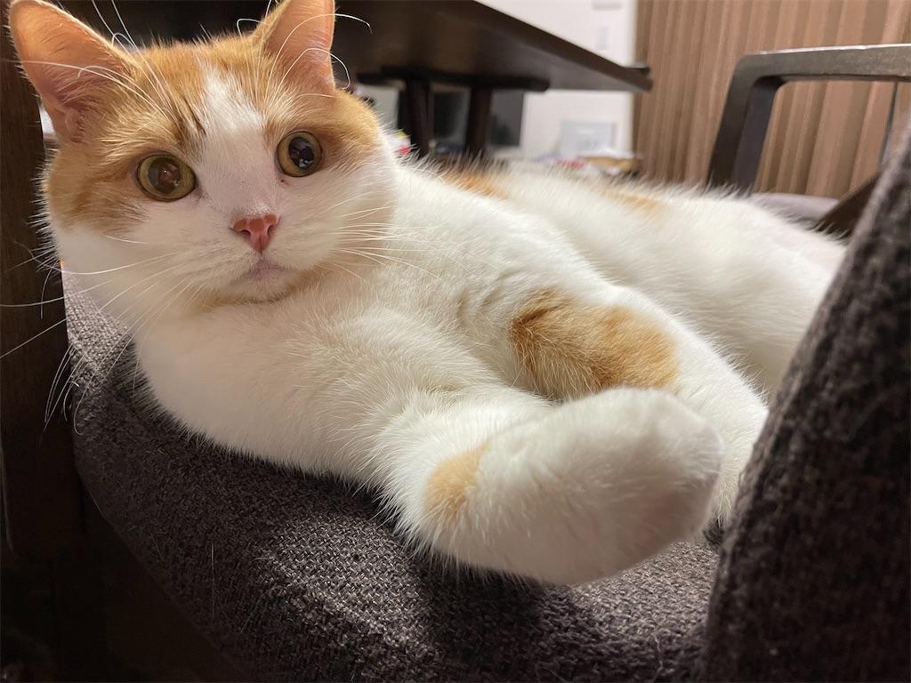 f:id:cat_lamune:20210516202349j:image