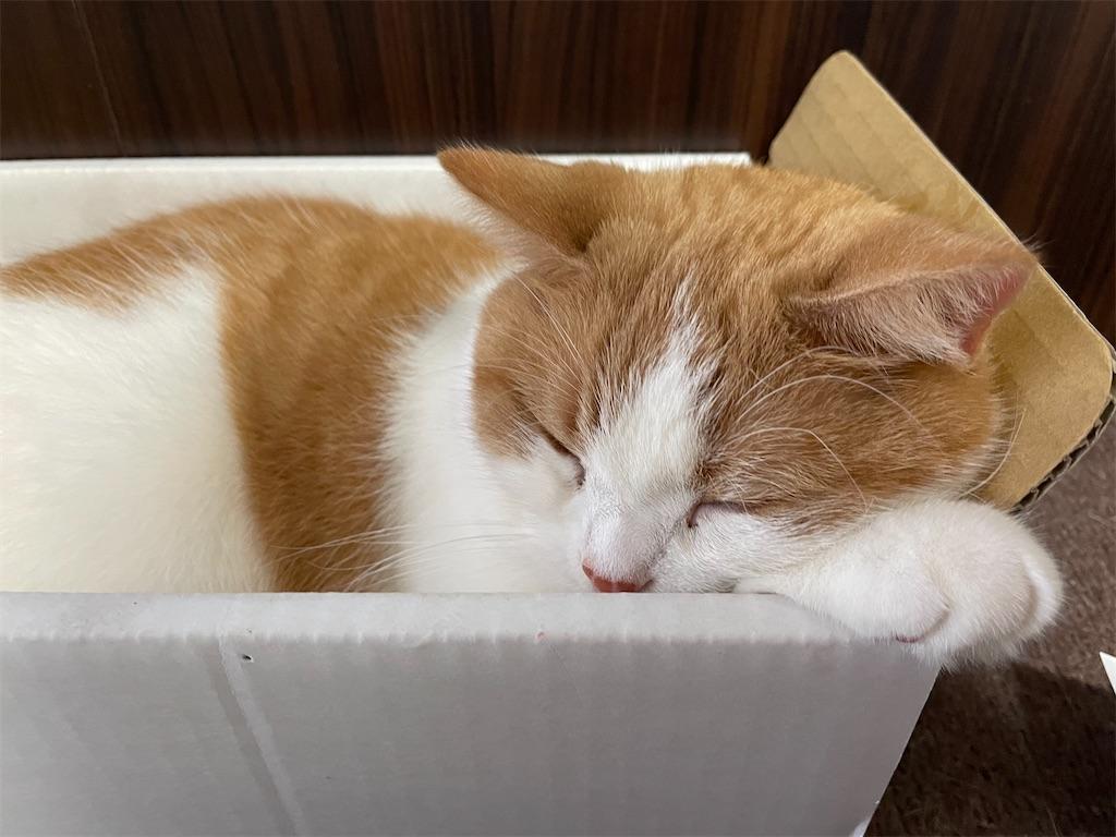 f:id:cat_lamune:20210524160407j:image