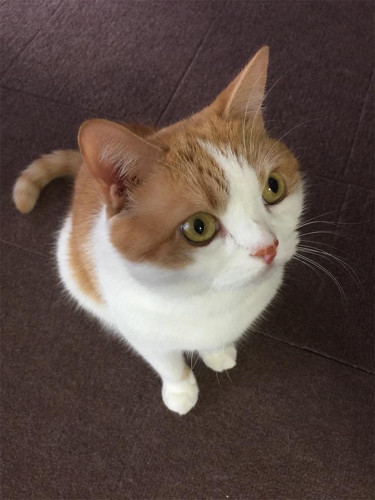 f:id:cat_lamune:20210529080440j:image