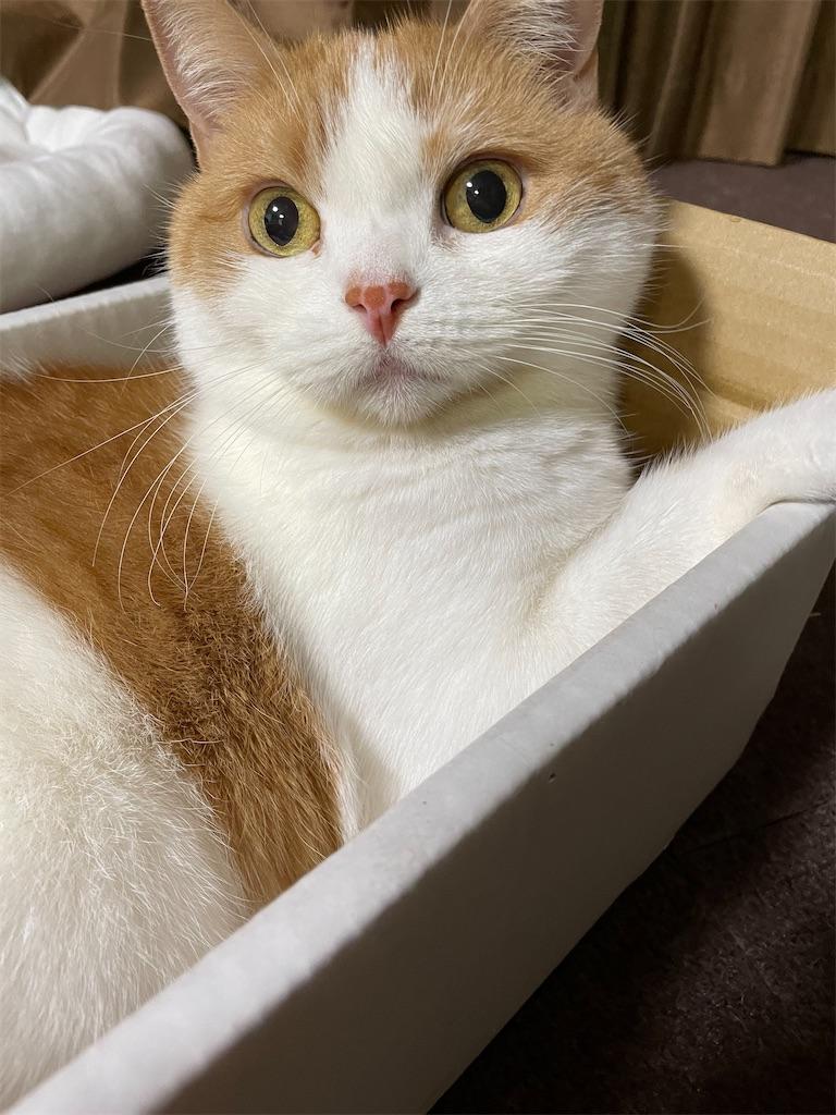 f:id:cat_lamune:20210608122500j:image