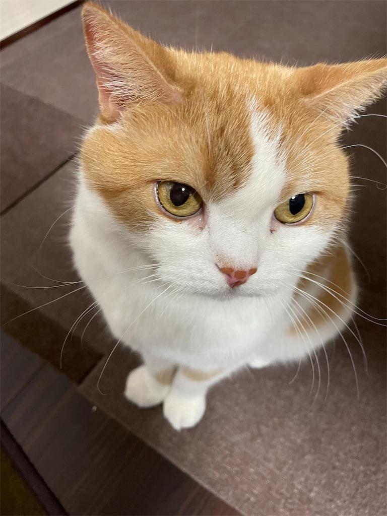 f:id:cat_lamune:20210704220847j:image