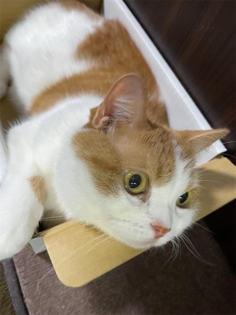 f:id:cat_lamune:20210711104919j:image