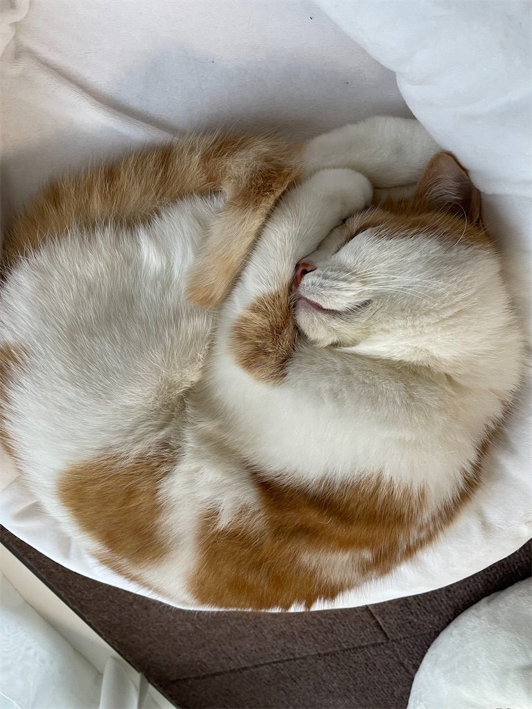 f:id:cat_lamune:20210722051135j:image