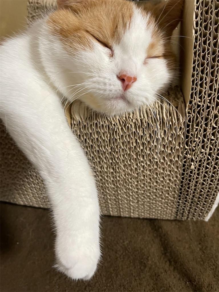 f:id:cat_lamune:20210803232959j:image