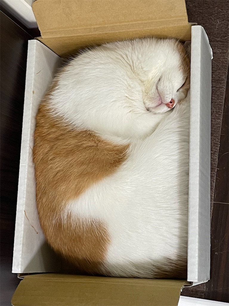 f:id:cat_lamune:20210914150330j:image
