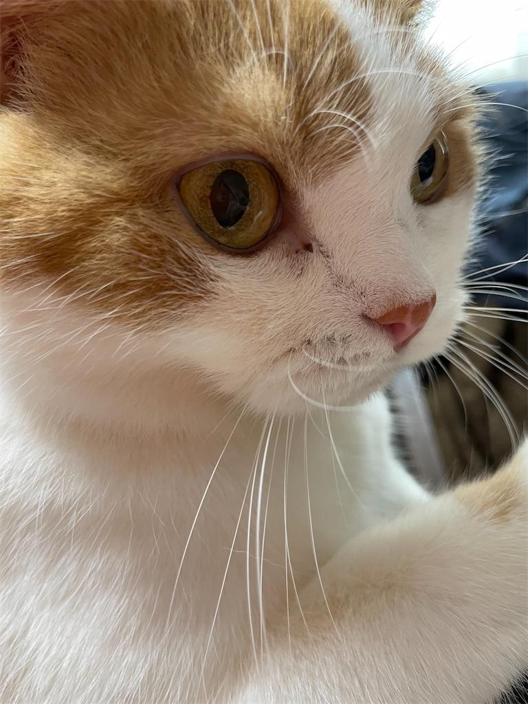 f:id:cat_lamune:20210928105325j:image