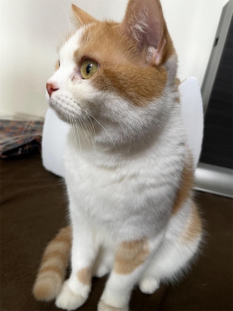 f:id:cat_lamune:20211011153326j:image