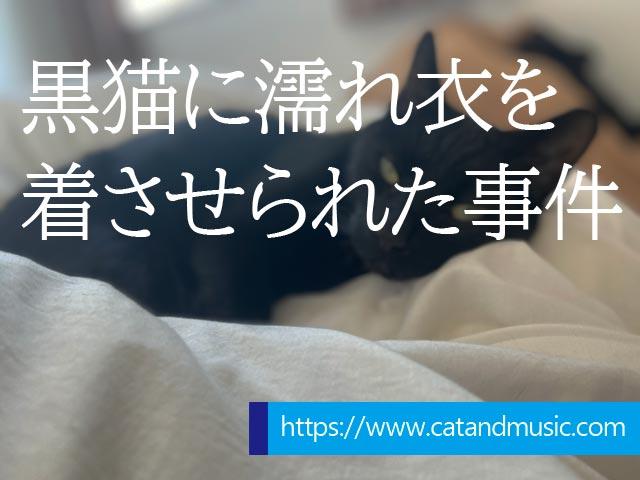 f:id:catandmusic:20200408021624j:plain