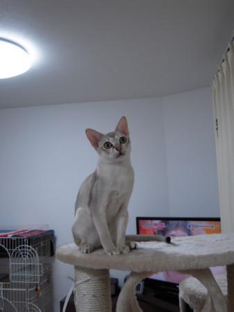 f:id:catball:20110107213700j:image