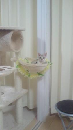 f:id:catball:20110123203500j:image