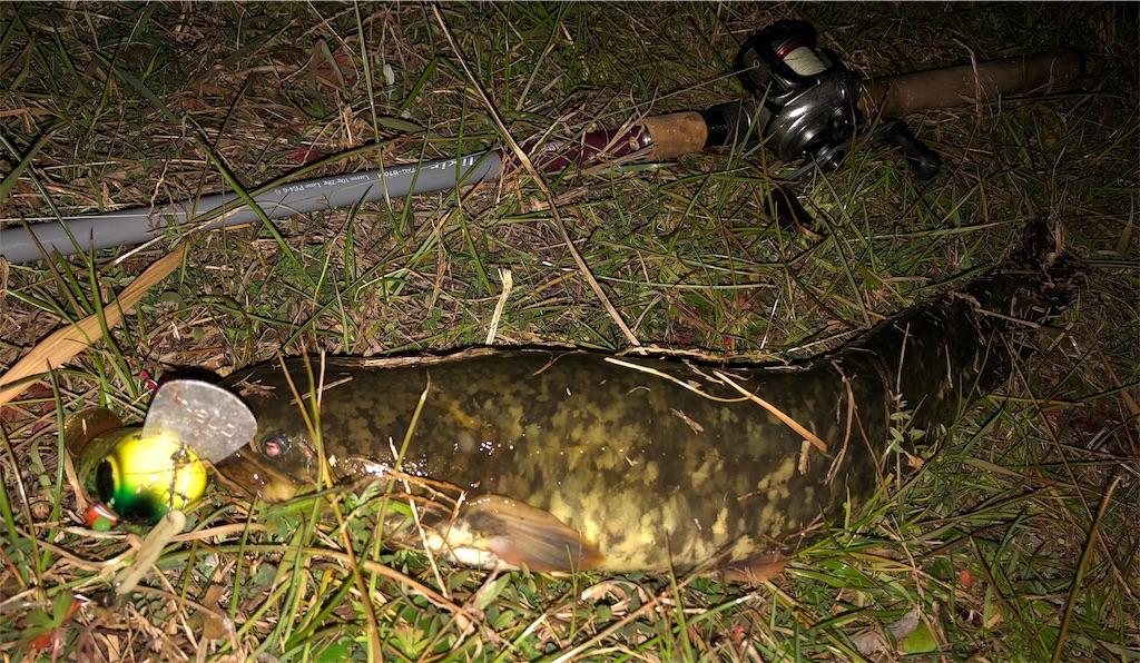 f:id:catfishkun:20200106215514j:image