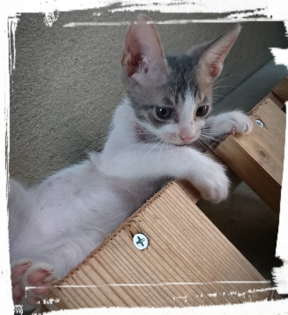 f:id:catonchan:20181124184348j:image