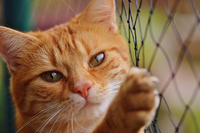 f:id:catpaper:20160517190638j:plain