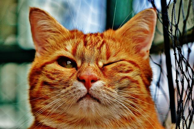 f:id:catpaper:20160524160858j:plain