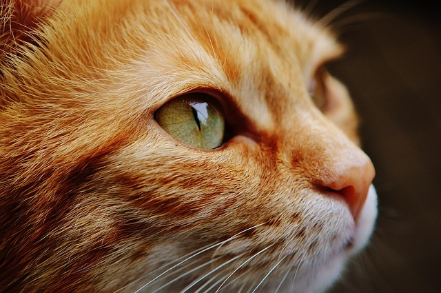 f:id:catpaper:20160629162331j:plain