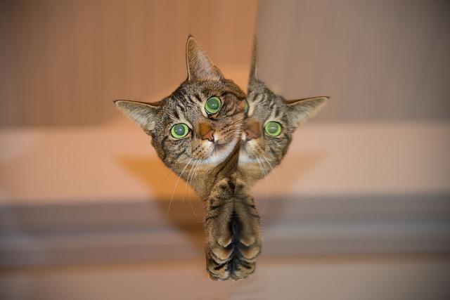 f:id:catpaper:20160907101340j:plain