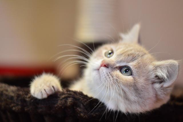 f:id:catpaper:20161116135605j:plain
