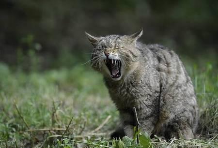 f:id:catpower:20190314211410j:plain