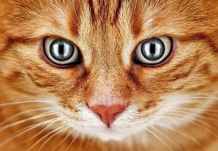 f:id:catpower:20190331061408j:plain