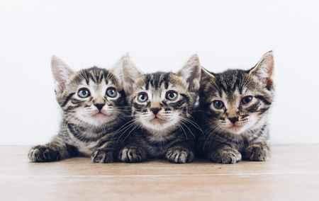 f:id:catpower:20210612150425j:plain