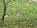 [動物][多摩動物公園]