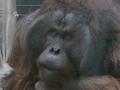 [動物][多摩動物公園] キュー