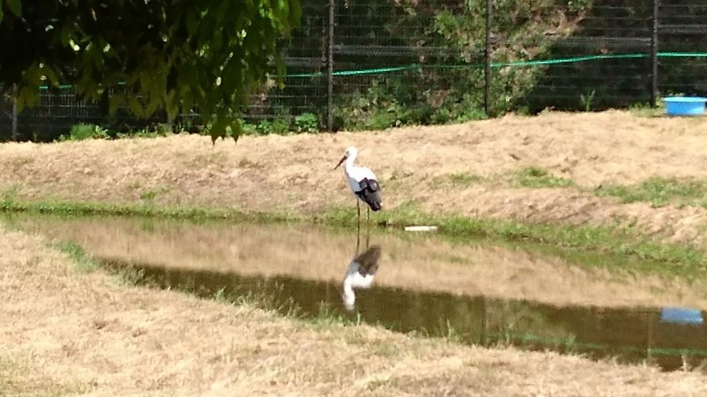 f:id:cbr1100xx-superblackbird-01:20170507220733j:plain
